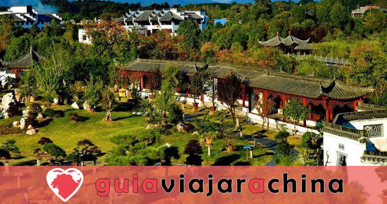 Jardín de la familia Bao - El mayor jardín de bonsáis de China 1