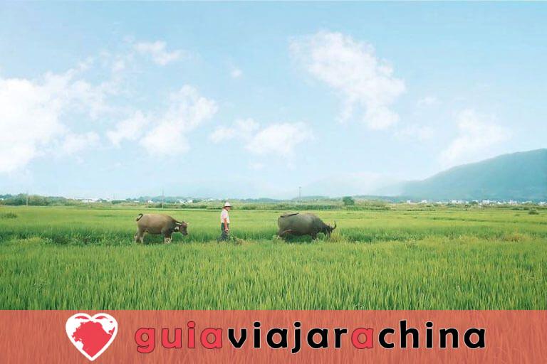 El pueblo de Bishan - Un mundo de utopía rústica escondido en el campo 2