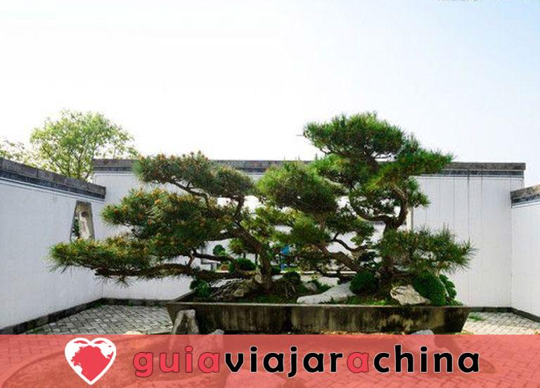Jardín de la familia Bao - El mayor jardín de bonsáis de China 3