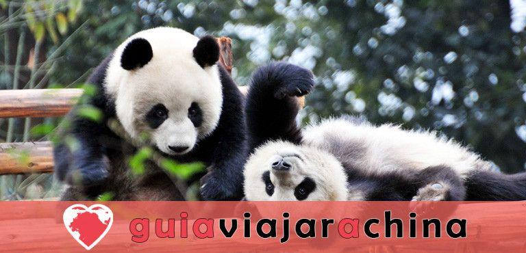 Chengdu Panda Base - la base de investigación de la cría del panda gigante 1