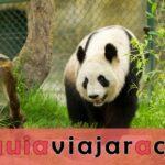 Valle del Panda de Dujiangyan