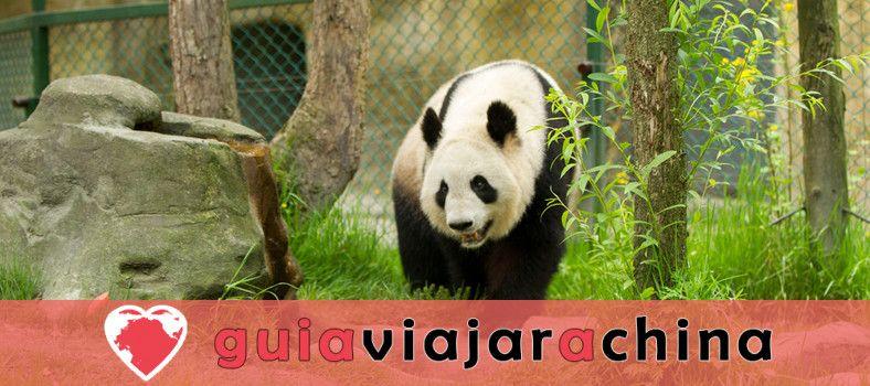 Valle del Panda de Dujiangyan 1