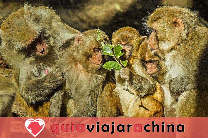 Shaxi Ancient Town (Jianchuan) - La ciudad de caravanas de caballos más intacta 8