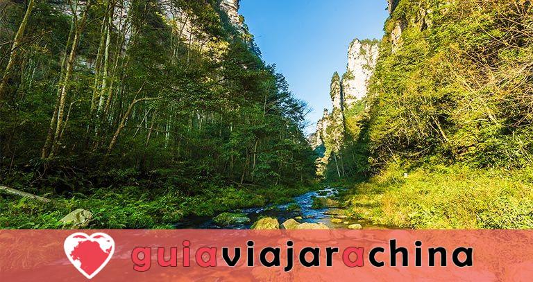 El arroyo Golden Whip - la ruta de senderismo más impresionante de Wulingyuan 1