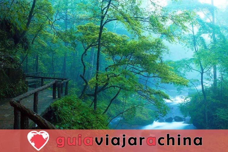 El arroyo Golden Whip - la ruta de senderismo más impresionante de Wulingyuan 3