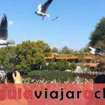Lago Verde Kunming - Jade en la Ciudad