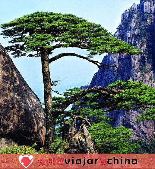 Huangshan(Montaña amarilla) - La montaña más bella de China 6