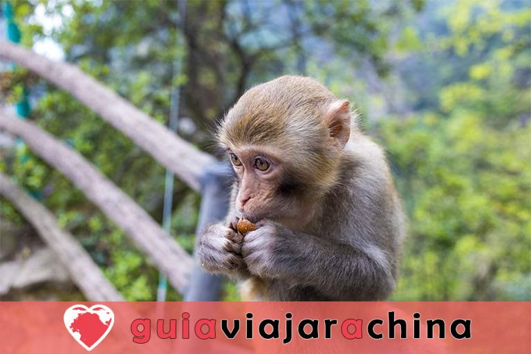 Huangshizhai (Pueblo de Huangshi) - El mirador más grande del Parque Forestal Nacional Zhangjiajie 7