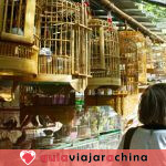 Mercado de Aves y Flores de Kunming - Epítome de la Vida en Kunming