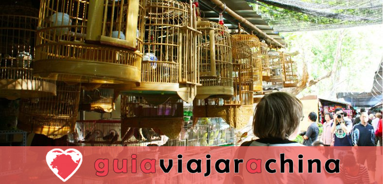 Mercado de Aves y Flores de Kunming - Epítome de la Vida en Kunming 1