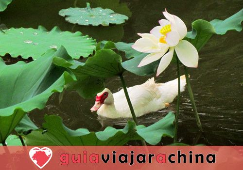 Lago Verde Kunming - Jade en la Ciudad 5