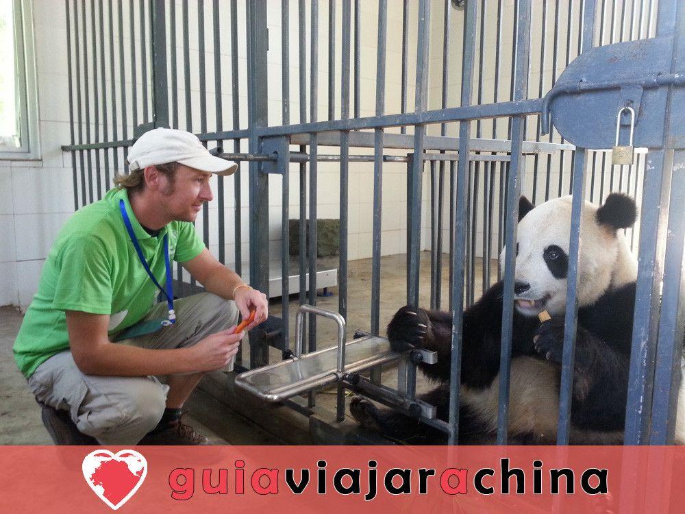 Valle del Panda de Dujiangyan 6