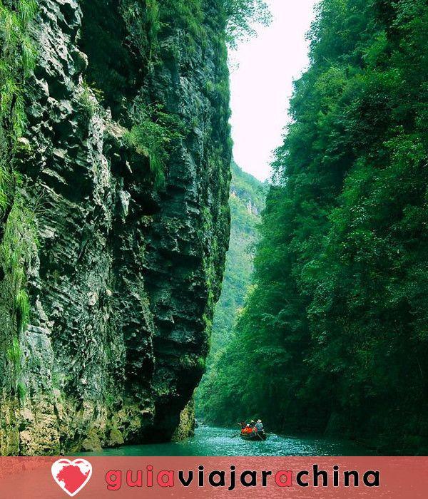 Corriente de Shennong - Pergamino de la Naturaleza Serena 2