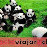 Base del Panda de Dujiangyan (Arca del Panda de Dujiangyan)