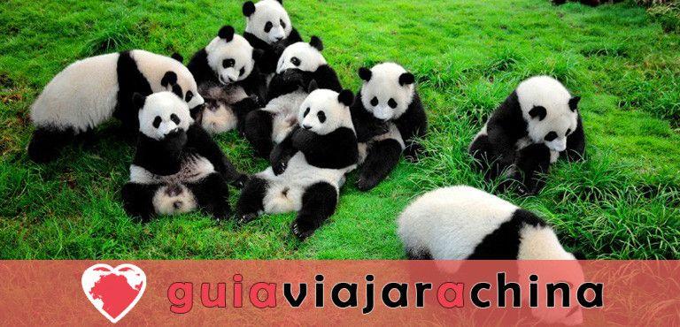Base del Panda de Dujiangyan (Arca del Panda de Dujiangyan) 1