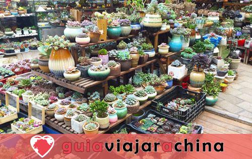 Mercado de Aves y Flores de Kunming - Epítome de la Vida en Kunming 4