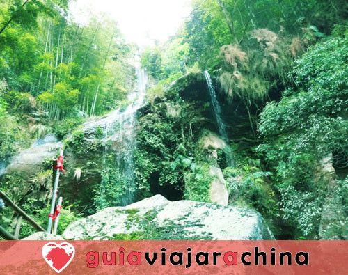 Bosque de bambú de Shunan - Barra de oxígeno natural 2