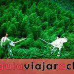 Bosque de bambú de Shunan - Barra de oxígeno natural