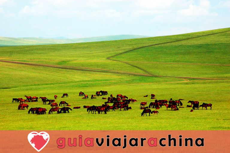 Pastizal Xilamuren - El pastizal más cercano de Hohhot 5